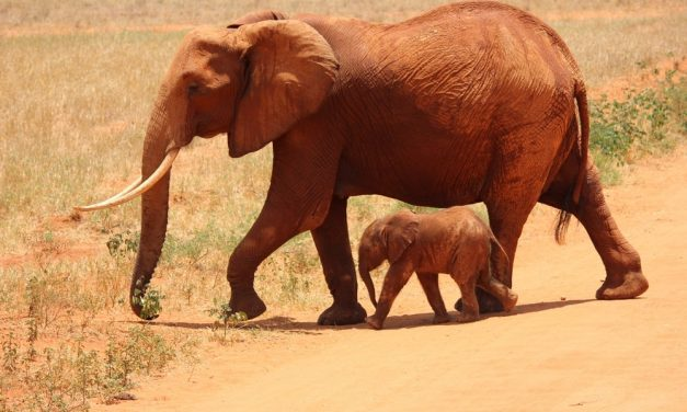 Comment s'appellent les bébés des animaux ?