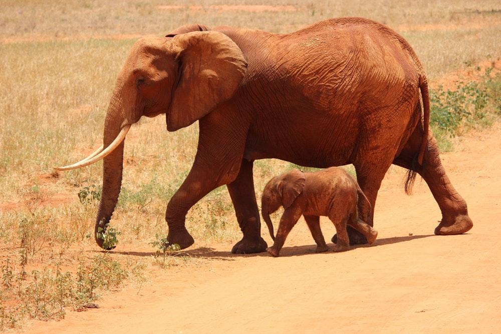 Nom des bébés des animaux : Comment appeler les petits ?