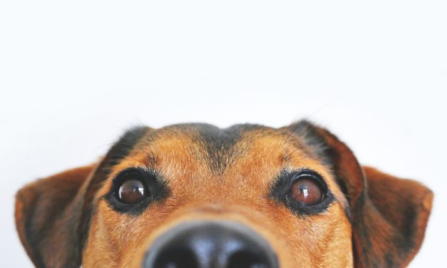 Avoir un chien peut aider à faire baisser la tension artérielle, est-ce vrai ?