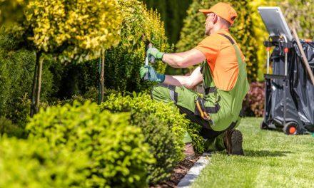 Entretenir votre jardin : 3 conseils pratiques pour réussir