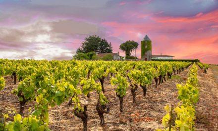 Faire découvrir les spécialités viticoles de la Vallée du Rhône à ses proches
